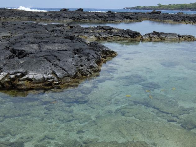 海がキレイなので浅瀬に取り残された魚が地上から見られる