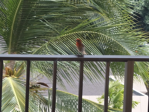 バルコニーには毎朝小鳥がやってきて、チュンチュン癒やしてくれる良き部屋だった
