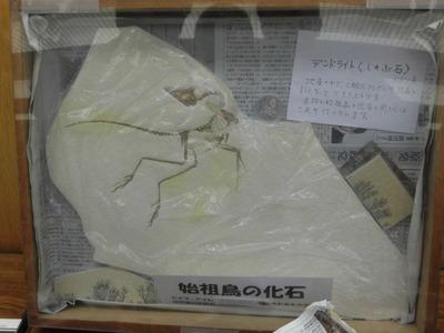 展示標本の始祖鳥化石