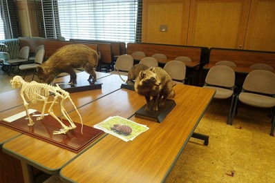 剥製と骨格標本