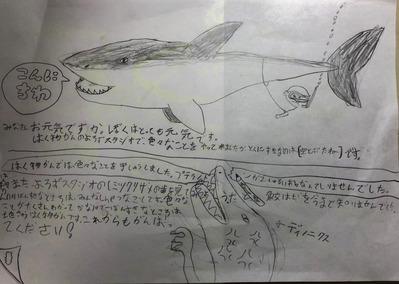 サメがこんにちは