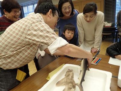 サメの歯もよく見てね20191215よろず「魚PC150103