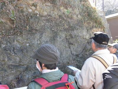 旧江の島道の池子層露頭
