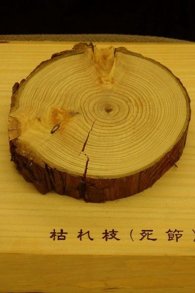 枝と幹の関係 (枯れ枝)