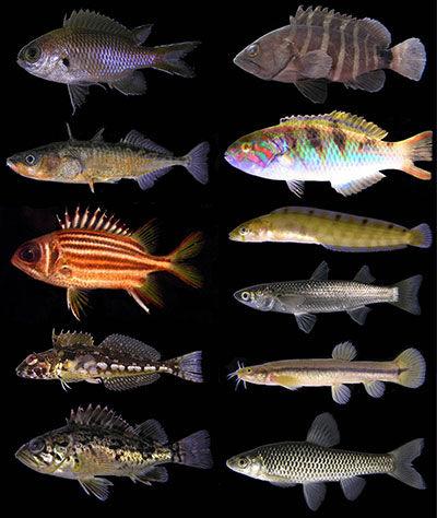 各地で作製してきた魚類標本