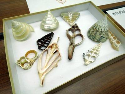 巻貝のスライス標本