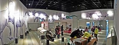 企画展「恐竜の玉手箱」展示室