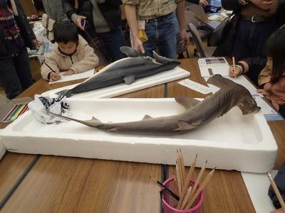 サメの絵をかく�