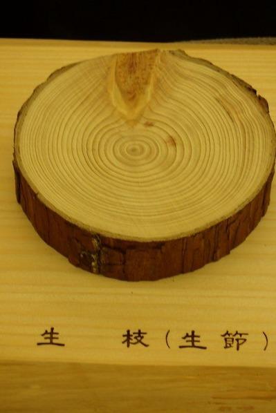 枝と幹の関係(生枝)