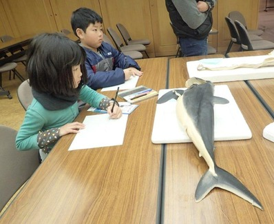 好きなサメを絵にする