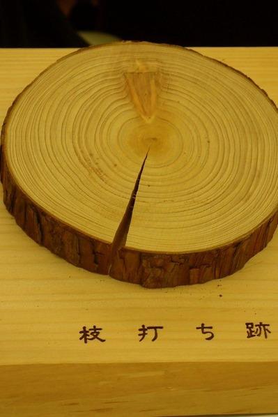 枝と幹の関係 (枝打ち跡)