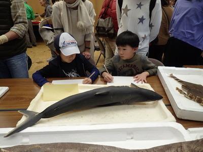 このサメを描こう20191215よろず「魚PC150068