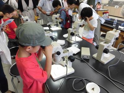 今回も人気No.1の顕微鏡