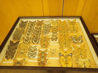 展示された標本の一部 (2)