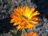 花とハチ君