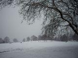 snowHeath