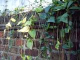 葉のカーテン