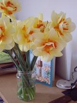 daffodel