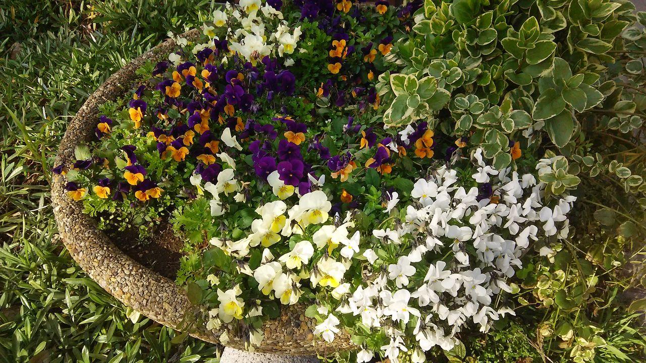 マンションの花7