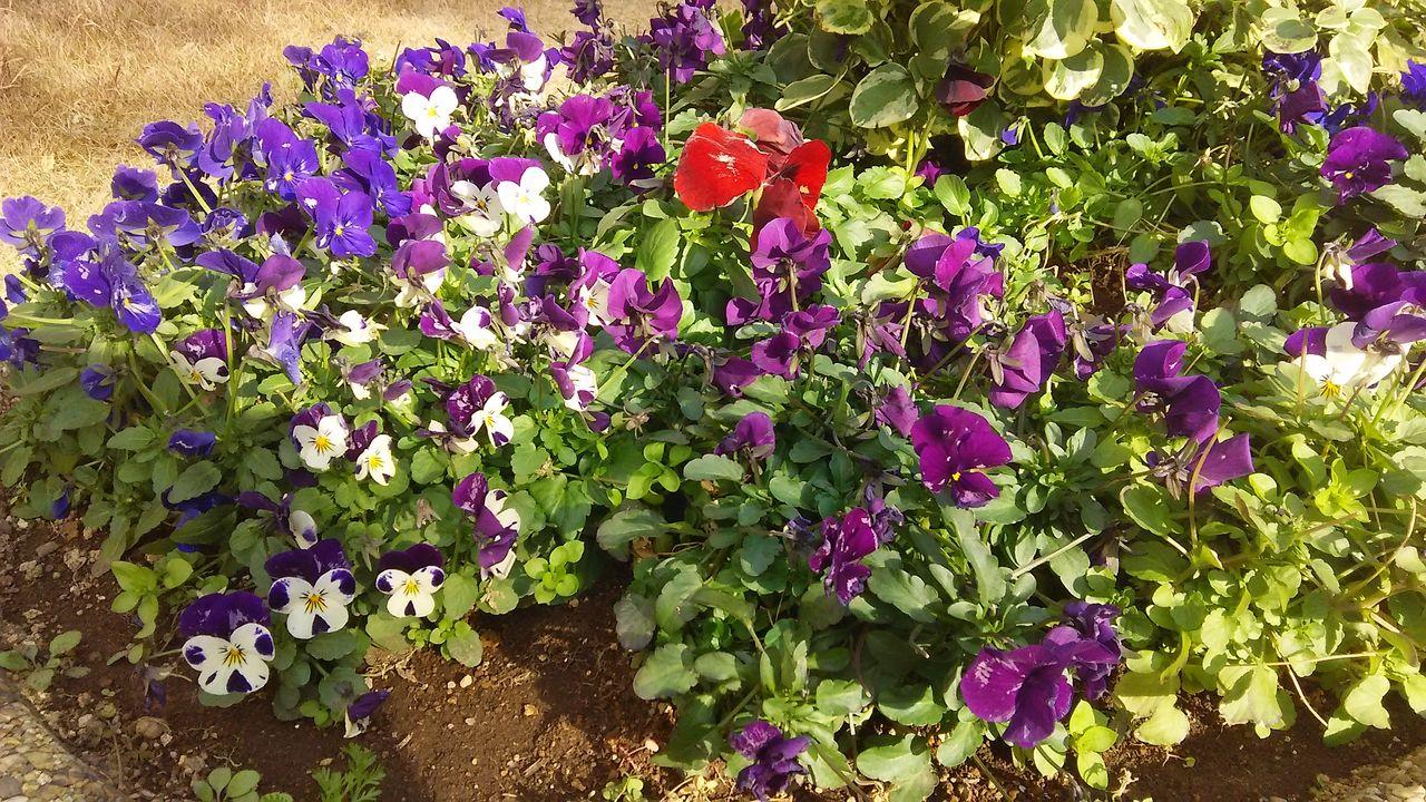 マンションの花5