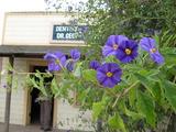 紫の花アップ