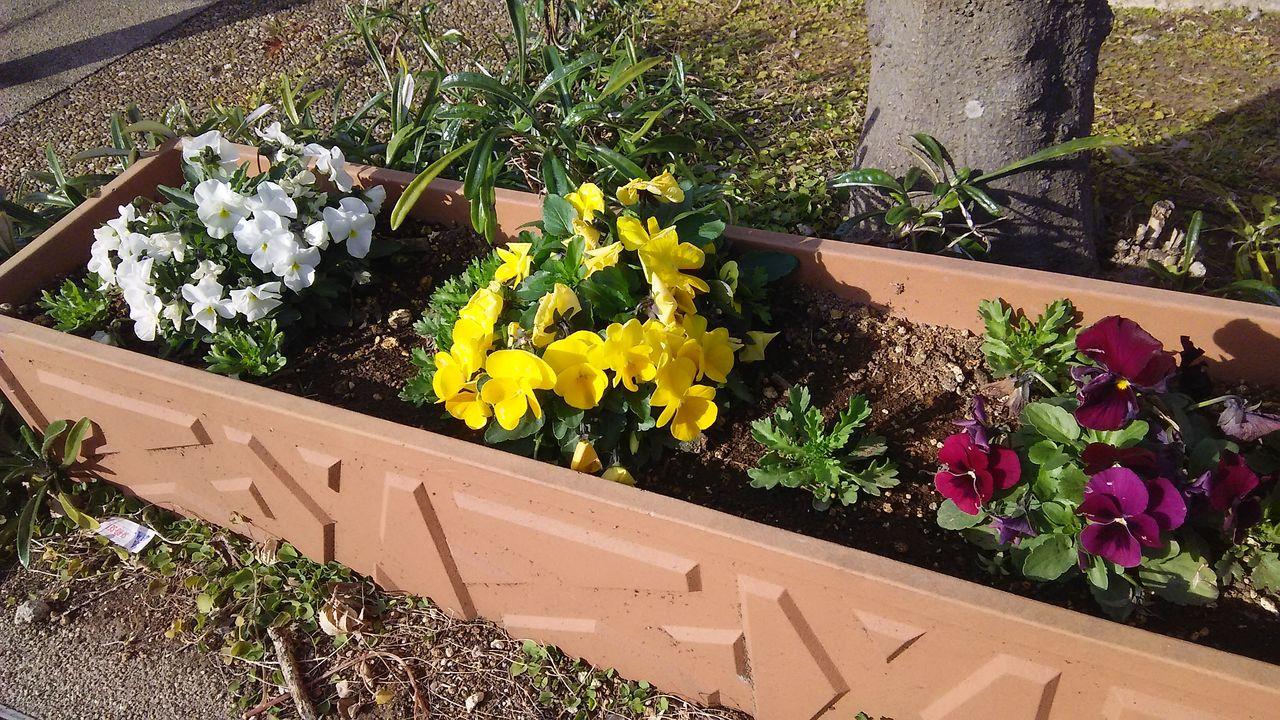 マンションの花8