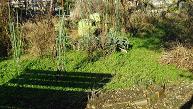 冬の自家菜園