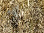 草の中のラベンダー