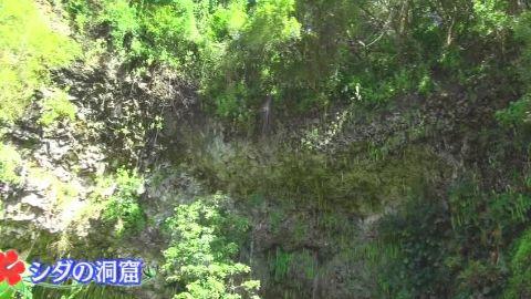 sakuraiHAWAI09_01