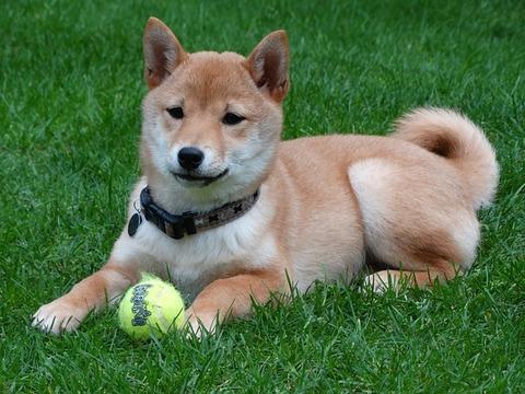 dog-2074370_640