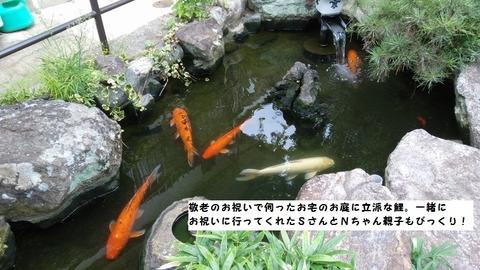 20180910 Fbカバー写真 お庭の鯉
