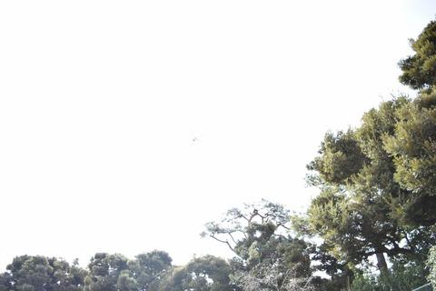 髦イ轣ス繧、繝倥y繝ウ繝亥・逵・DSC_0231 (800x533)