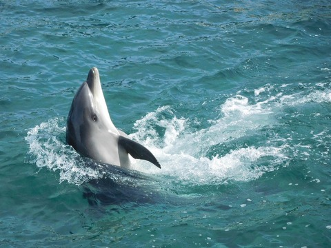 138 Dolphin
