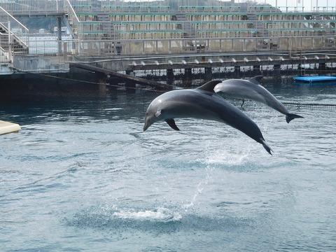 166 Dolphin