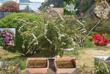 20210403_プランター菜園と庭の花木