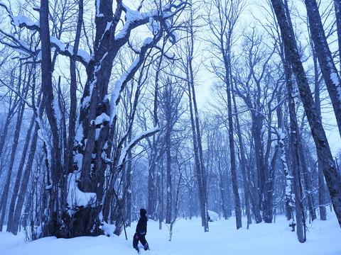 (画像)里山スケッチ2月下旬