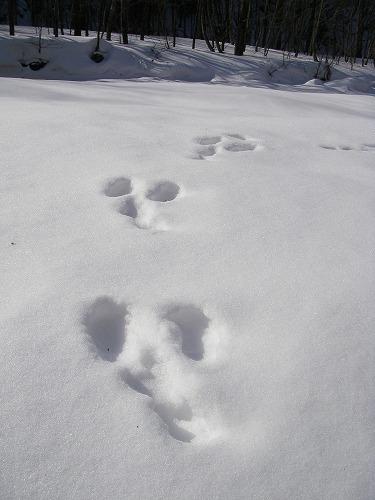 足跡-ウサギ