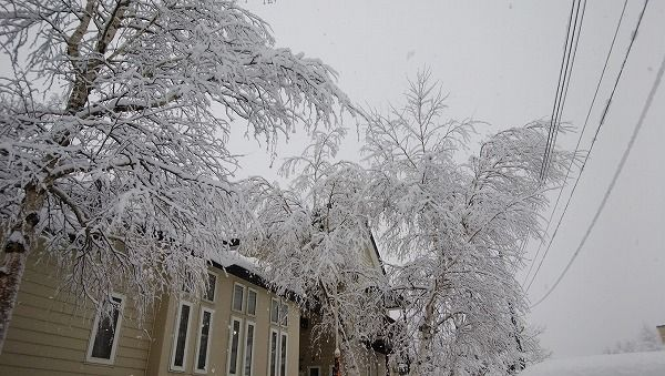 11-26 雪景色2-1