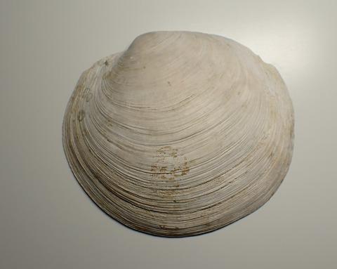 196.Meganodontia acetobulum
