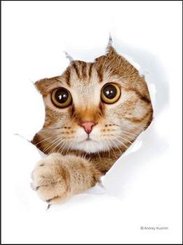 ブロッコリーキャラクタースリーブ 猫呼んだ