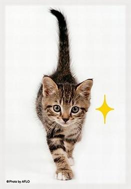 猫「キラリ」