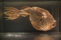 深海ギャラリー01(撮影・Aさん)
