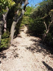 馬の背登山道12