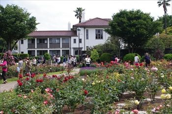 横浜山手の港の見える丘公園にあるバラ園
