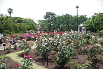 横浜山手の「港の見える丘公園」のローズガーデン
