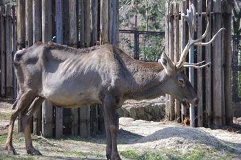 横浜金沢区にある「金沢動物園」の動物