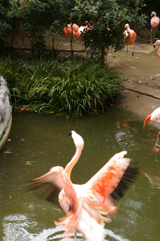 横浜日ノ出町「野毛山動物園」のフラミンゴ