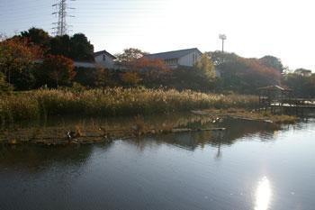 岸根公園の篠原池