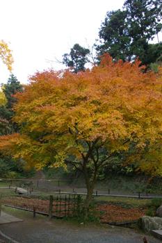 北鎌倉「明月院」の紅葉3