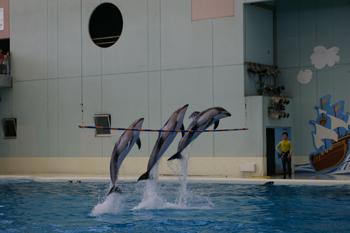 横浜・八景島シーパラダイスのイルカ
